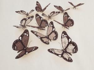 Butterflies 3D 2